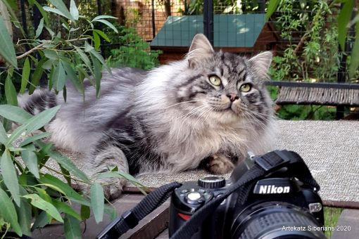 Nikon Siberiada of ArtéKatz